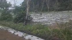 Hutan Ungkalan
