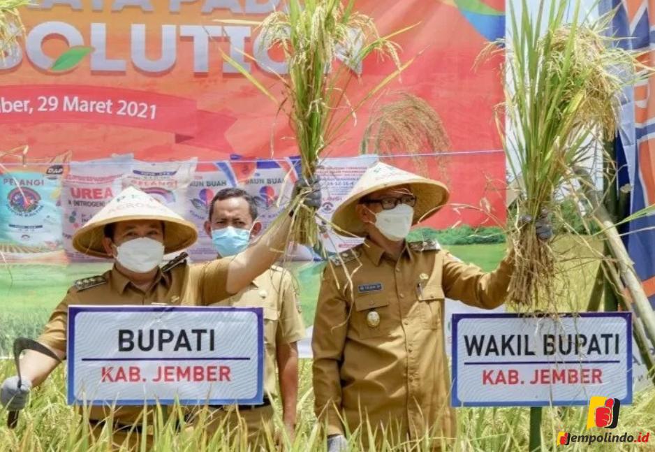 Stabiitias harga beras